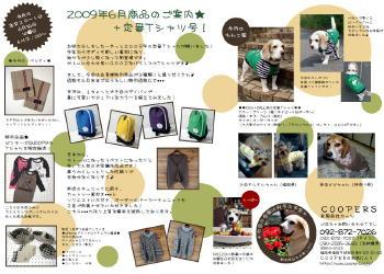 blog2506.jpg