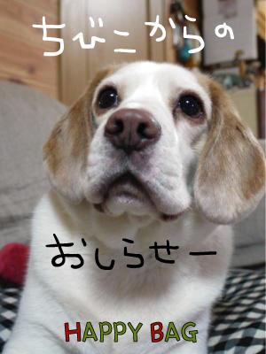 blog2820.jpg